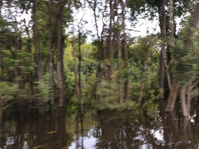 Área em Careiro, Amazonas - AM53001 - 11