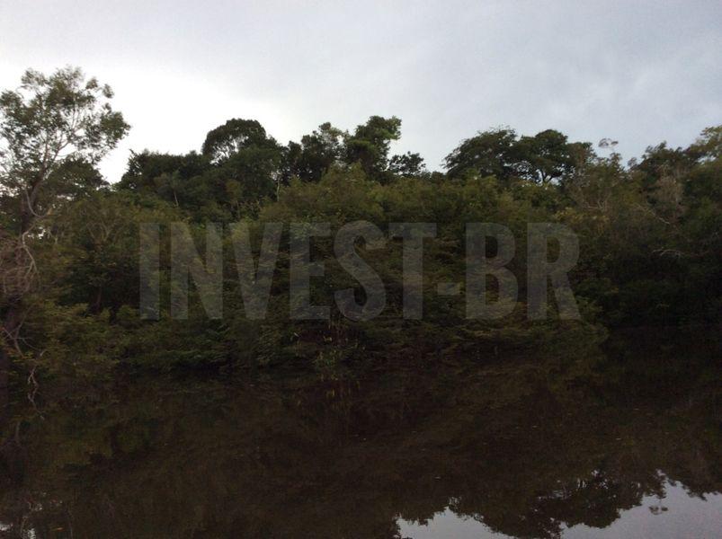 Área em Careiro, Amazonas - AM53001 - 12