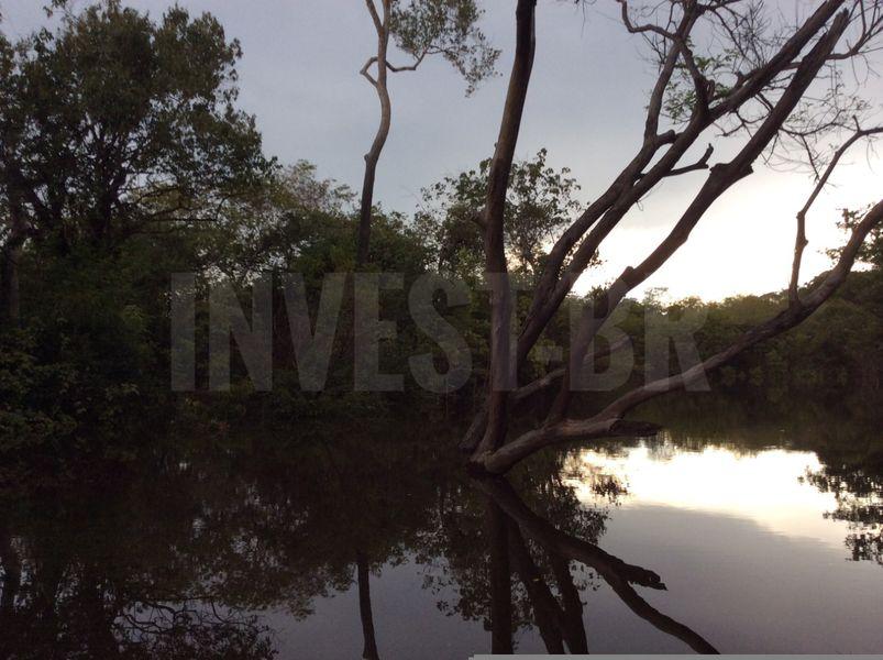 Área em Careiro, Amazonas - AM53001 - 13