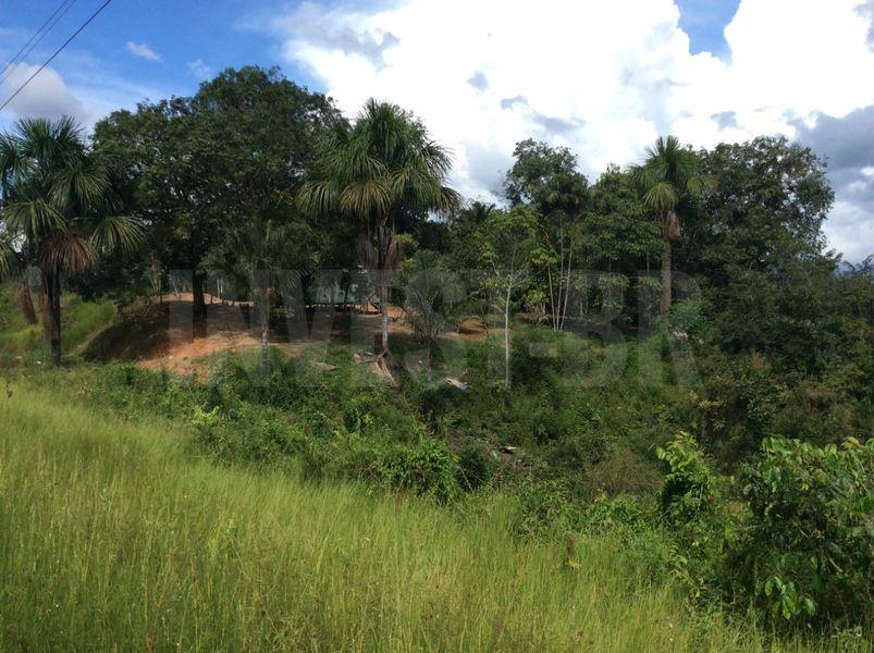 Área em Careiro, Amazonas - AM53001 - 3